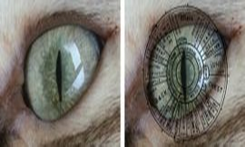 Pet Iridology